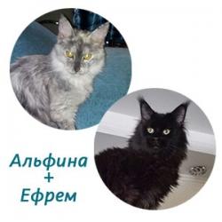Альфина + Ефрем