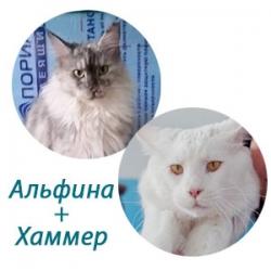 Альфина+Хаммер