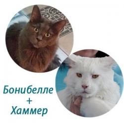 Бонибелле+Хаммер