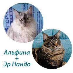 Альфина+Эр Нандо