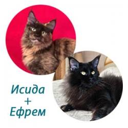 Исида + Ефрем
