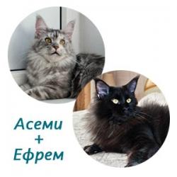Асеми + Ефрем
